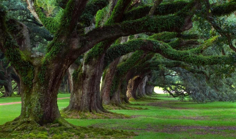 природа, trees, park, full, summer, весна, картинка,