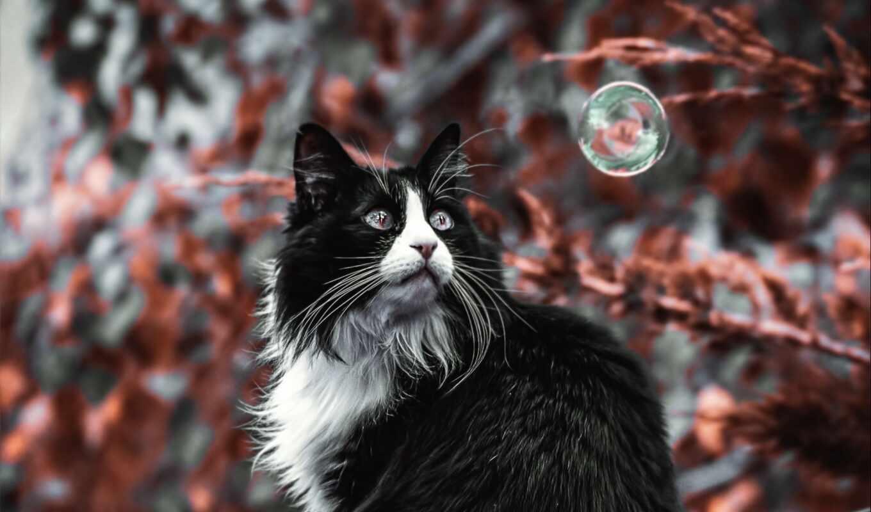 кот, pet, крыша, мяч, пушистый, телефон, mobile, ноутбук