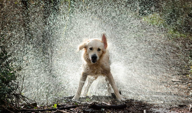 обои, брызги, собака, вода, собаки, капли, фото, р