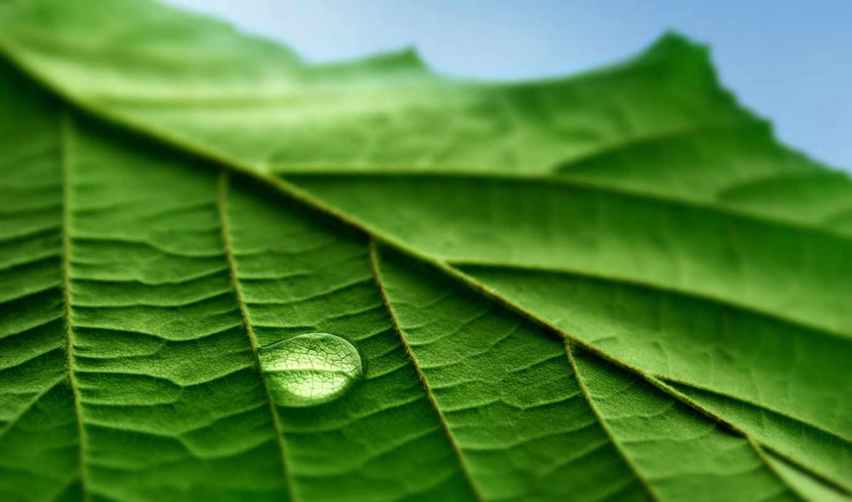 макро, листья, капли, фотографии, картинка, compounding, pharmacy, texto, health, como, green, leaf, vista, горизонтали, имеет,