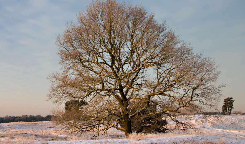 nature, winter, tutfon, scenes, zoom,