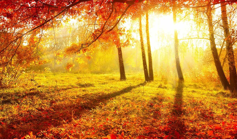 осень, природа, листва, trees, утро, лес,