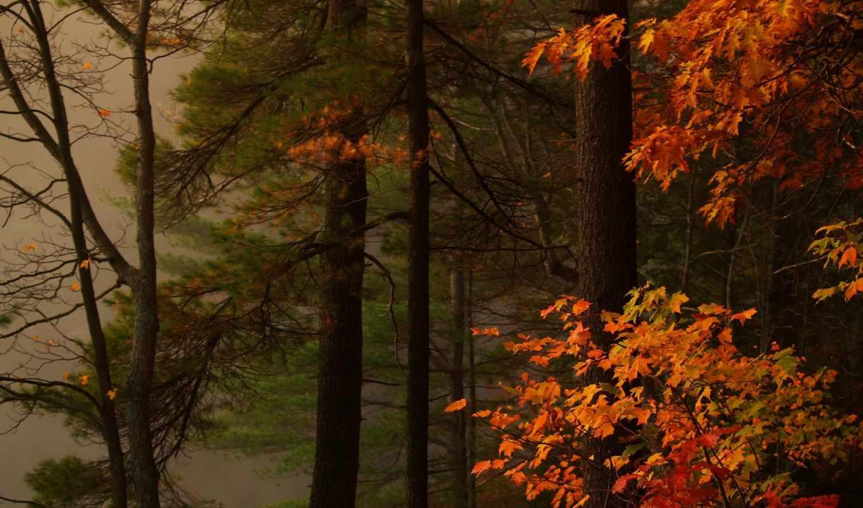 картинка, природа, леса, осень, trees, paints,