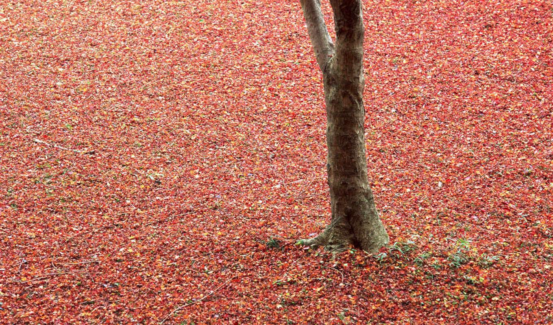 листьев, осенних, osen, разных, разрешениях, осени,
