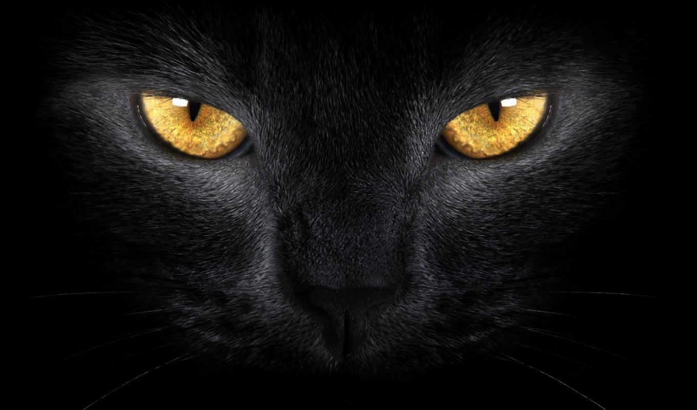 кот, монитор, source, other, dimension, cats, black,