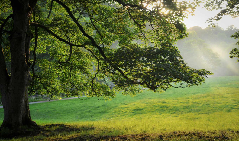 трава, природа, дерево, лес, summer, картинка, листья,