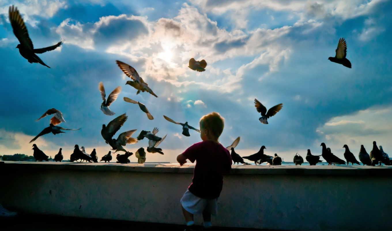 мальчик, птицы, небо, wallpaper, голуби, малыш, pigeons, картинка, avec, عکس, écran, petit, garçon, des, fonds,