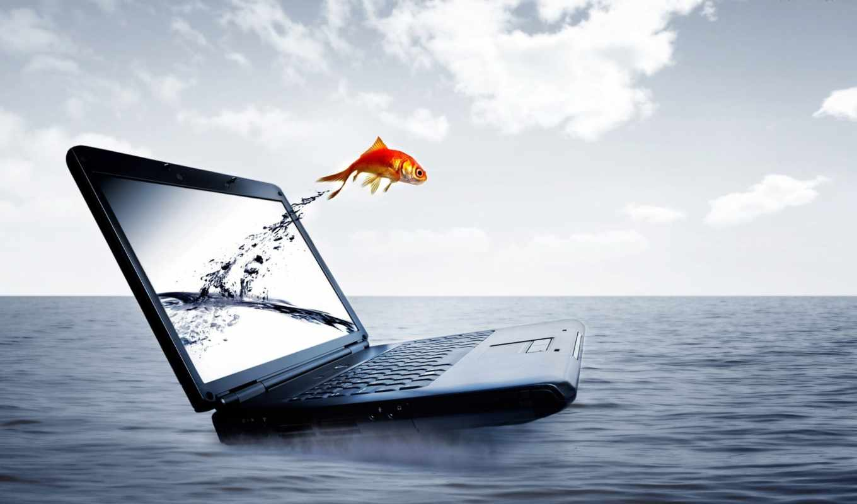 ماهی, ноутбук, вода, рыбка, fish, море, заработать, рыба, قرمز, download, ноут, прыжок, интернет, laptop, motion, fly, ноутбука, های, عکس,