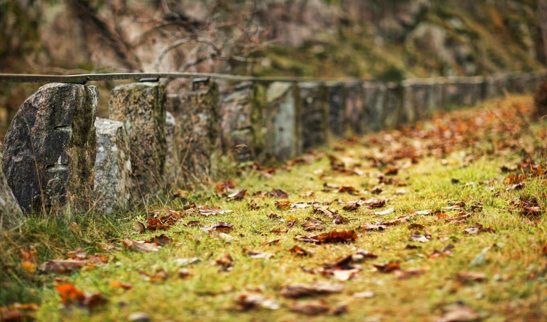 листья, грусть, осень, природа,