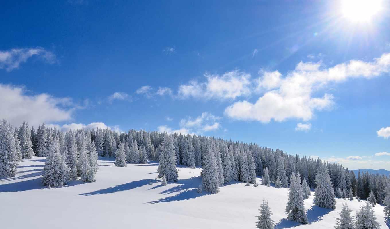 снежный лес картинки для рабочего стола