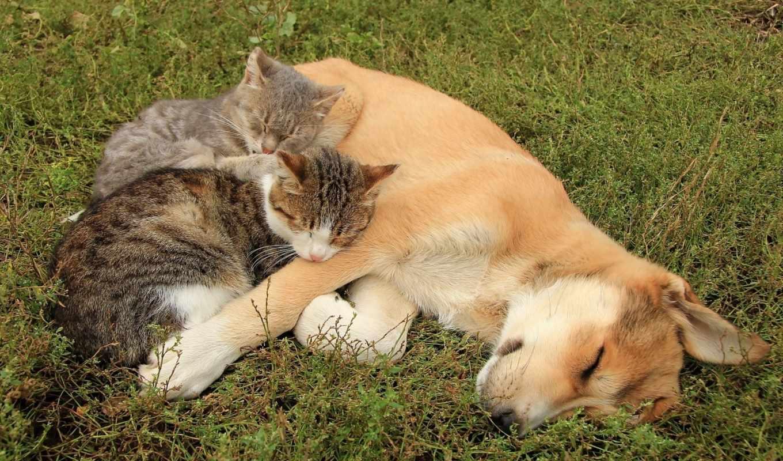 животные, кошки, коты, взгляд, щенок, дружба,