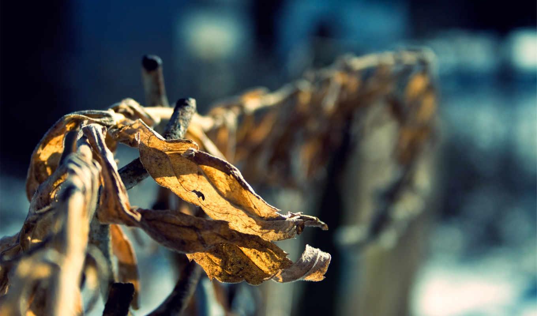 листья, осень, сухие, февр, макро, закат, оранжевые,
