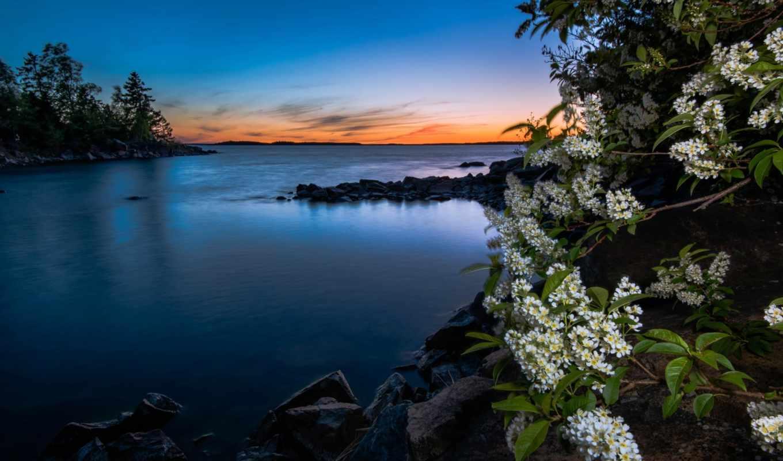 cherry, белая, цветущая, весной, каменистом, заката, fone, июня,