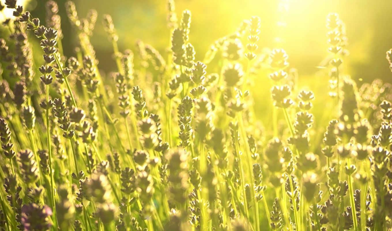 daylight, зелёный, поля, природа, desktop,