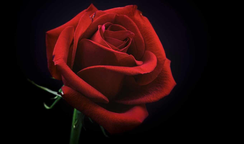 взлёт, роза, ресторан, ipad, цветы, казань, bordovyi, dark, club, наталья, chistopolskii