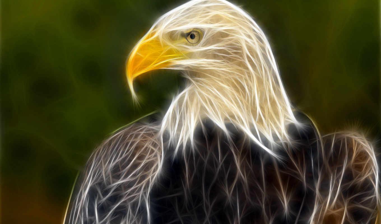 орлан, полном, животные,