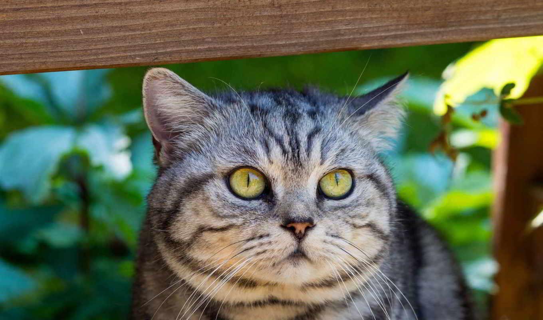 кот, картинка, бесплатную, телефон, mobile, картинку, высоком,