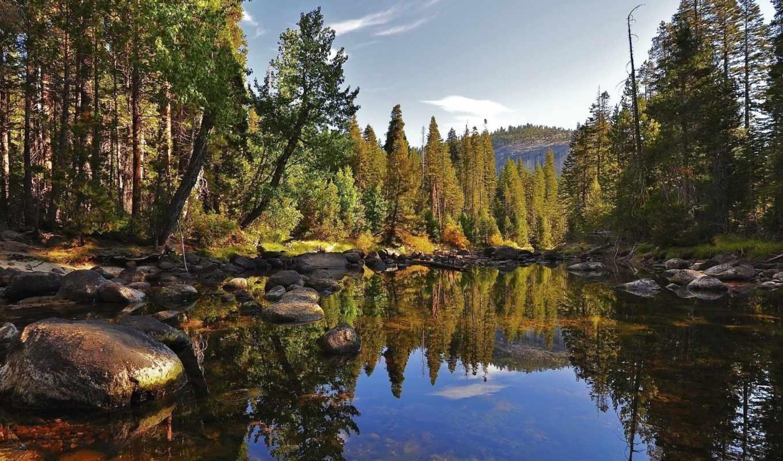 лес, тег, которых, озеро, всех, есть, trees, камни, отражение, широкоформатные,
