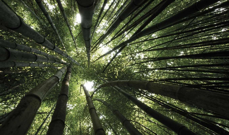 бамбук, trees, ниже, кроны, свет, листва, вертикальный, full, зелёный,