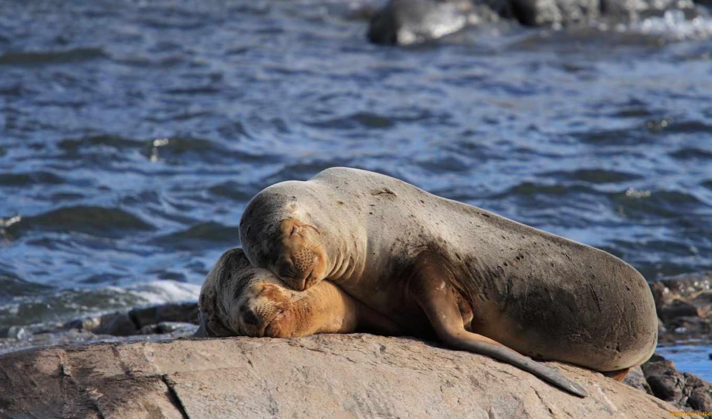 море, ushuaia, lion, lions, аргентина, world, great, otaria,