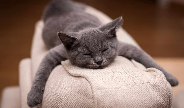 кот, sleeping, кота, спит, full,