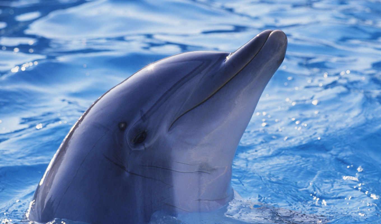 дельфины, дельфин, дельфинами, главная, zhivotnye,