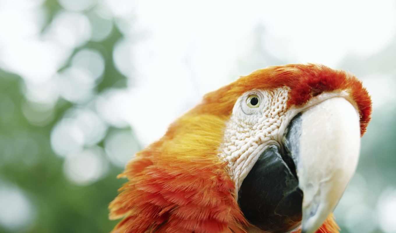 ara, попугай, попугаем, удивленный, разрешениях, разных,