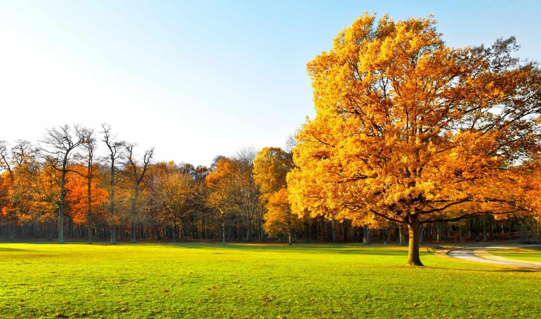 autumn, landscape, nature, trees, garden, panorama, картинка, картинку, деревья,