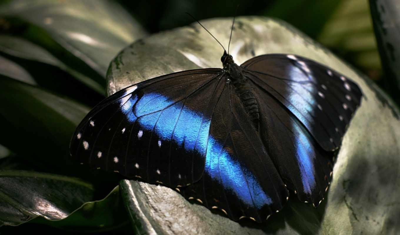 узор, разделе, усики, природа, синий, черный, февр, красота, бабочка,