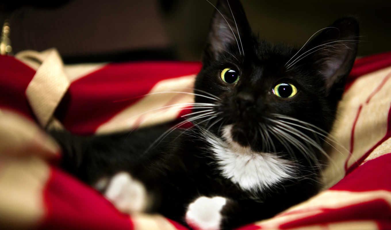 black, кот, котенок,
