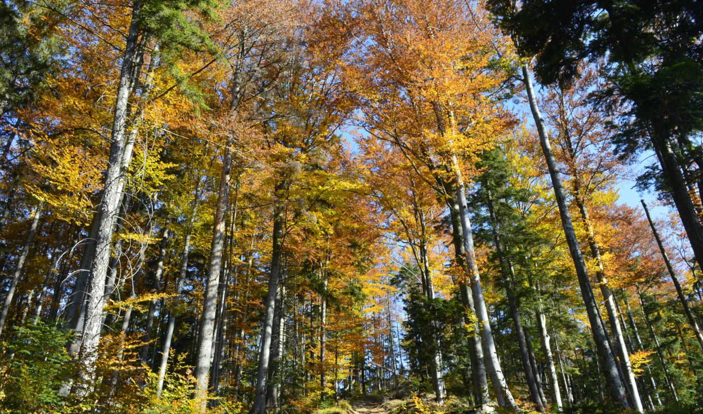 ,лес, осень, небо, тропинка,