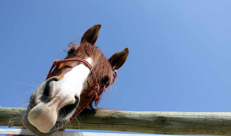 лошадь, браун, black,