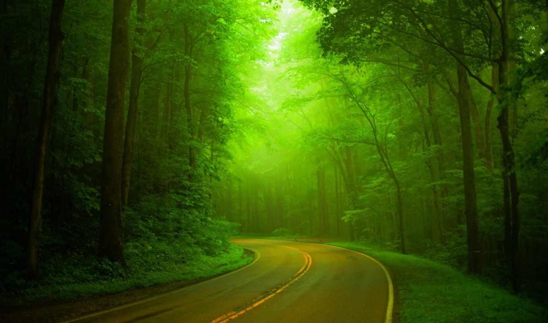 природа, landscape, зелёный, trees, лес, тропинка, дорога, прогулка, hazy, park, весна,