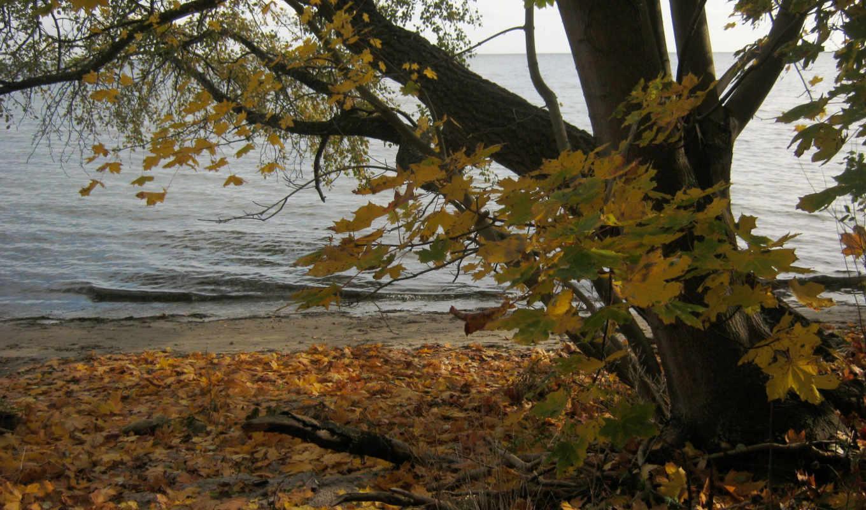 природа, деревья, осень, побережье, реки, времена, года, трава, poland, озеро, небо,