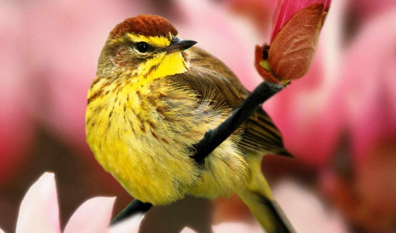 ,птица,желтая,ветка,красивая,