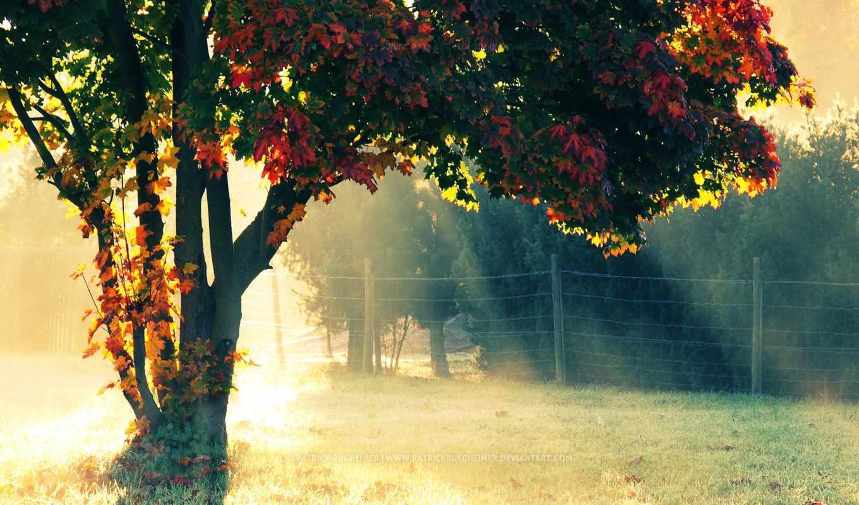 солнечный, свет, деревья, трава,