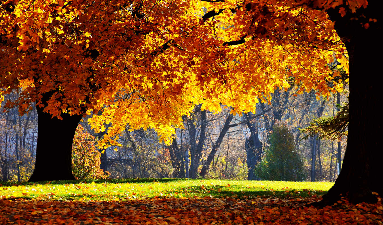 осень, можно, осени, осенью, когда, утро,