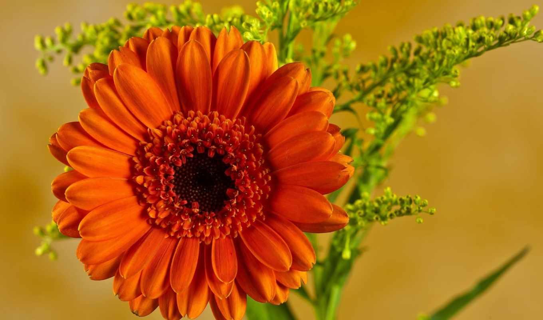 цветы, azalea,