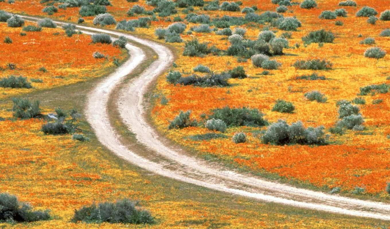природа, antelope, долина, галереи, красивые, осень, usa, california,
