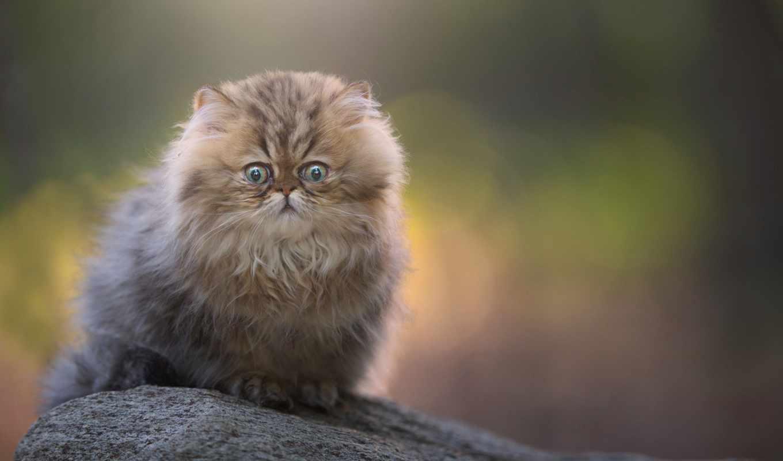 кот, характера, качестве, разнотематическ, превосходных, микс, количество,