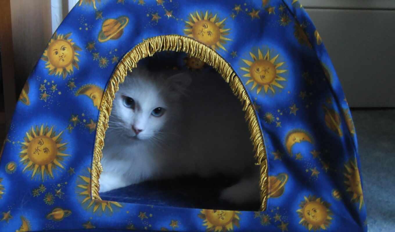 окно, кот, anytime, тема, karoum, cute, gato, animal