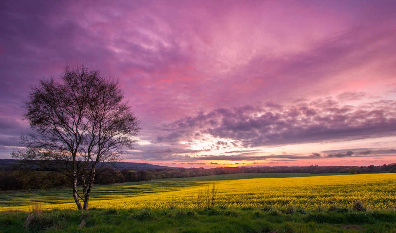 небо, краски, плое, дерево, закат, трава, картинка,
