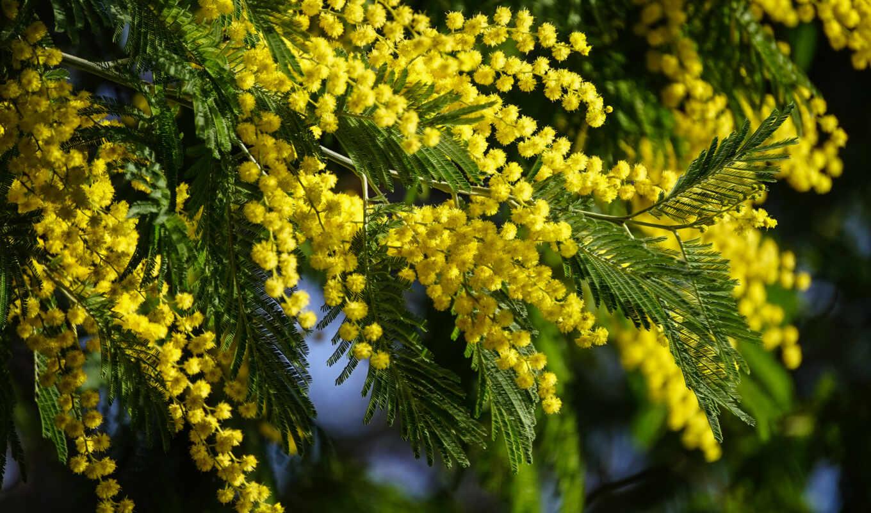 весна, цветы, shirokoformatnyi