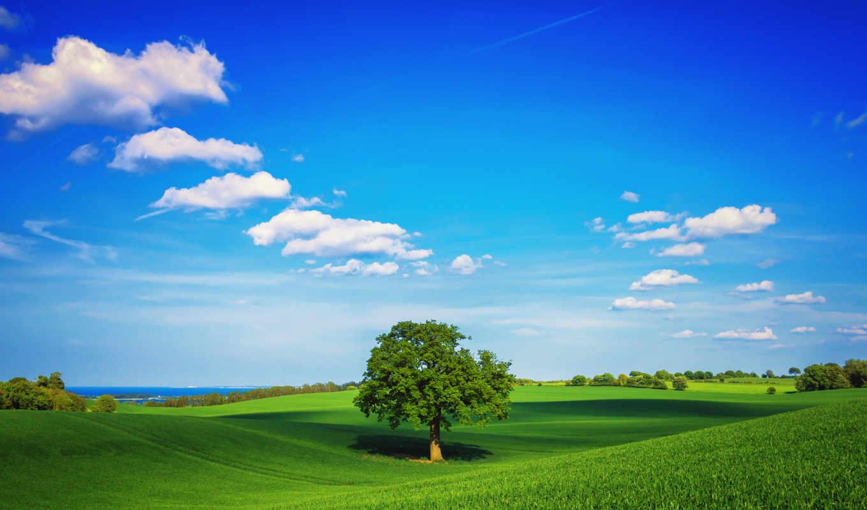 поле, небо, дерево, зелень, облака, трава, весна, desktop, картинка, картинку,