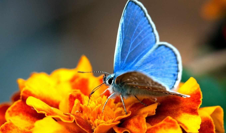 цветы, бабочки, бабочка, голубая, прекрасное, цветке, сочетание, наступит, абсолютно, скоро, вместе,
