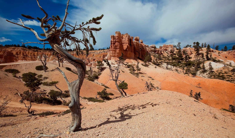 природа, горы, лето, дерево, landscapes, часть, природы,