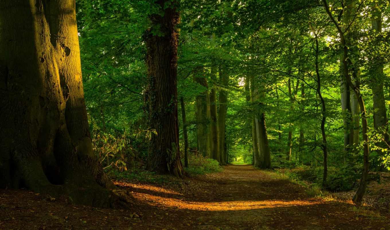 листва, лес, тропинка, деревья, свет,