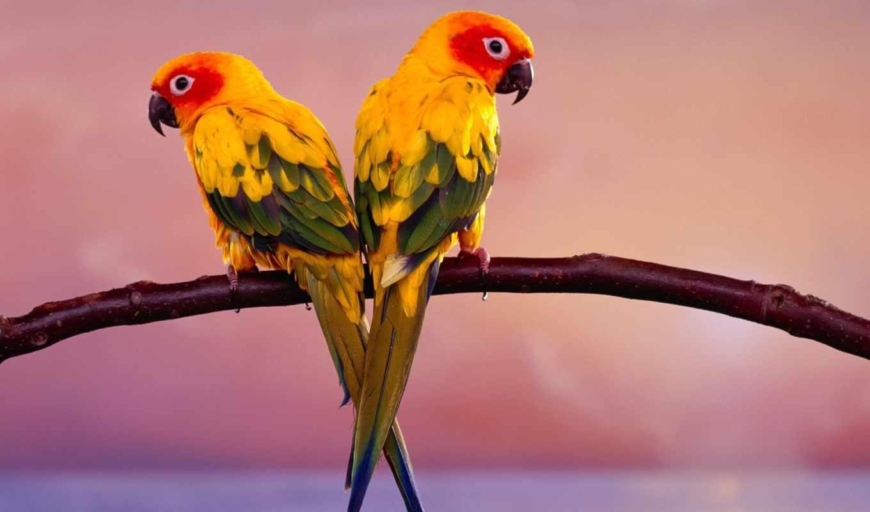 birds, птица, desktop, free, you,