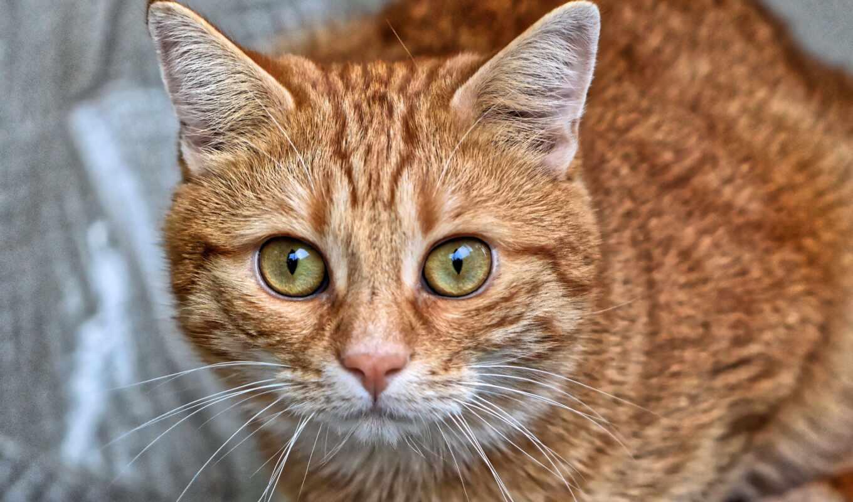 кот, глаз, зелёный, фото, animal, pet, cute, зеленое, red