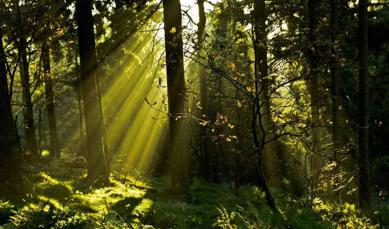 trees, лес, природа, свет, ветки, трава, rays, деревьев, sun, листва, стволы,